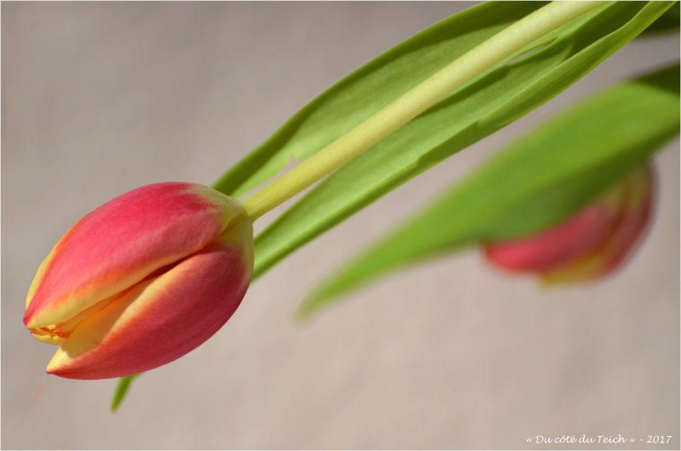 blog-dsc_40970-bouquet-de-tulipes.jpg