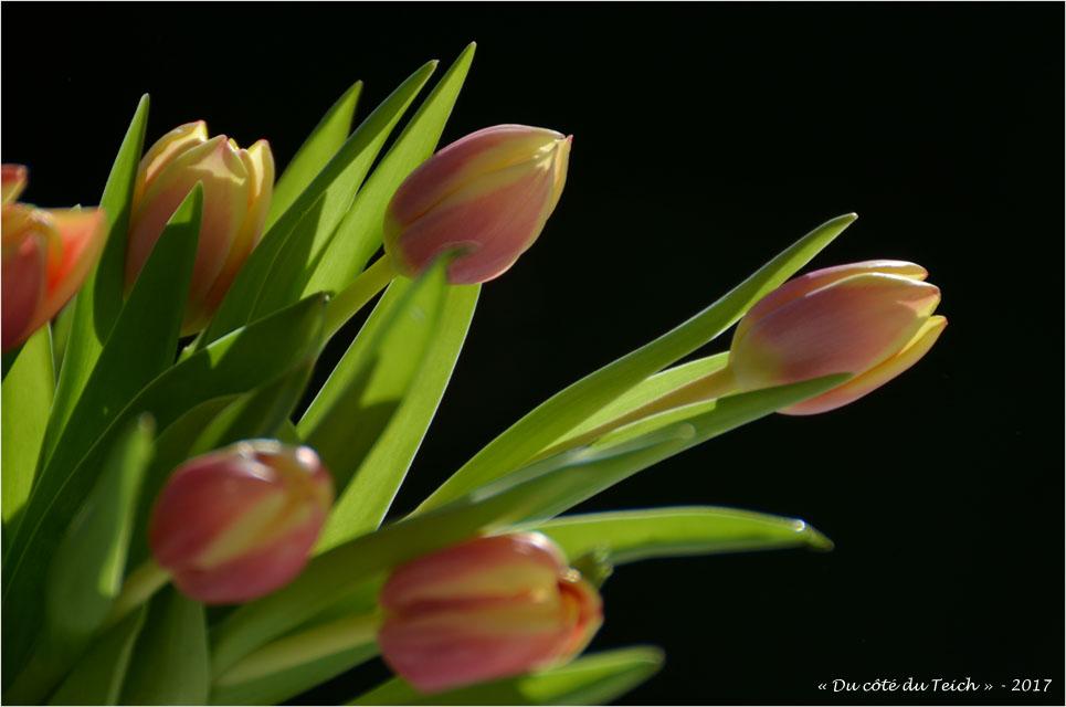 blog-dsc_40971-bouquet-de-tulipes.jpg