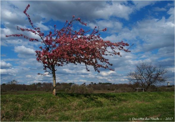BLOG-P3288270-arbre fleuri port Audenge