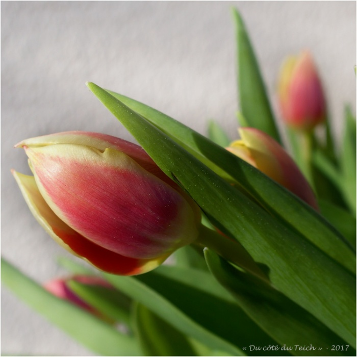 blog-p4068486-bouquet-tulipes.jpg