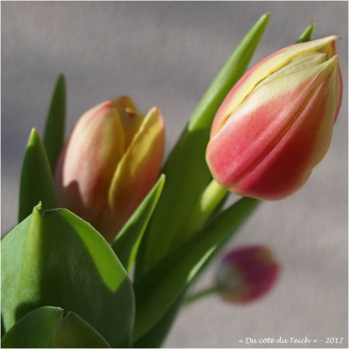blog-p4068489-bouquet-tulipes.jpg