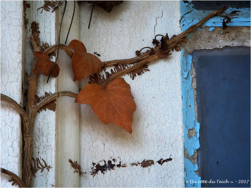 blog-p4118661-lierre-cabane-biganos.jpg