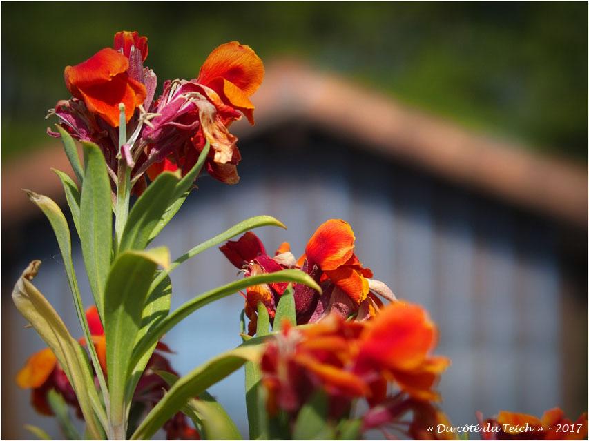 blog-p4118666-fleurs-et-cabane-petit-port-biganos.jpg