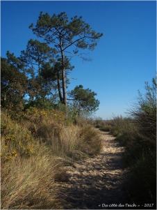 BLOG-P4128728-pins sentier prés salés Arès