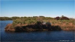 BLOG-P4128737-anciens réservoirs à poissons prés salés Arès