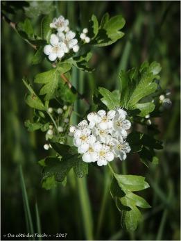 BLOG-P4128749-printemps prés salés Arès