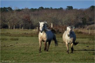 BLOG-DSC_34182-chevaux le Teich