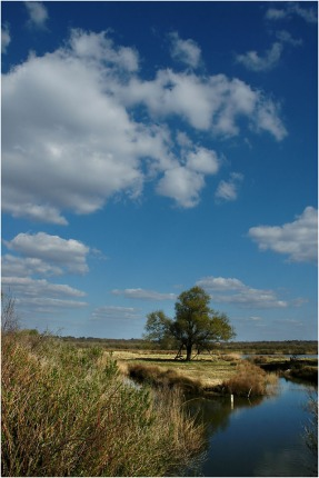 BLOG-DSC_8644-plaines du Teich