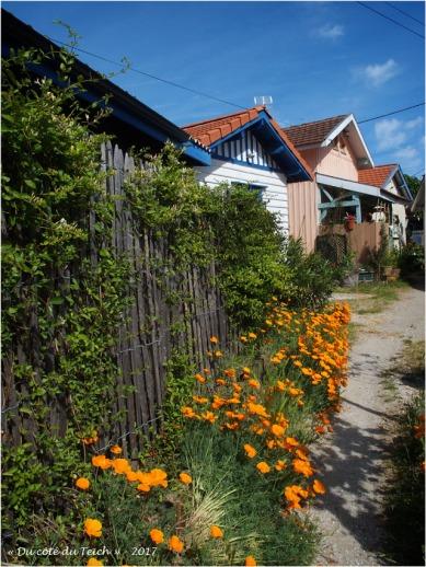 BLOG-P5099138-fleurs et cabanes Grand Piquey