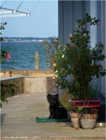 BLOG-P5099208-petit chien village presqu'ile