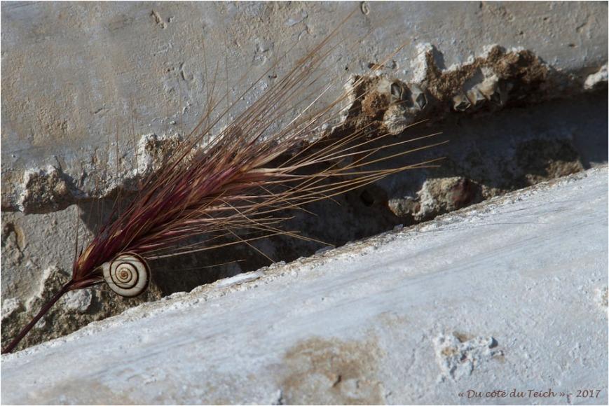 blog-p6029510-escargot-épi-et-tuilles-chaulées.jpg