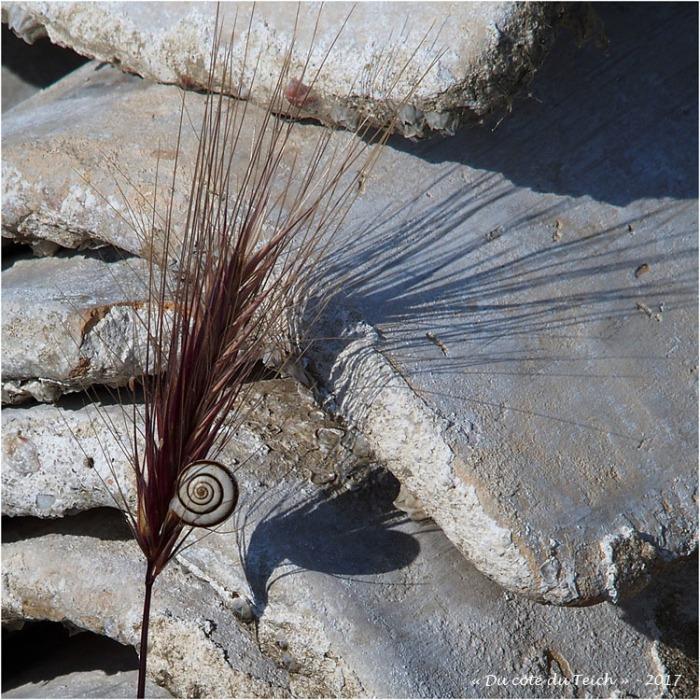 blog-p6029512-escargot-épi-ombre-coeur-et-tuilles-chaulées.jpg