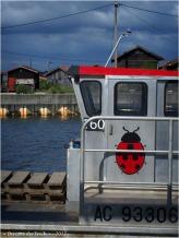 BLOG-P6099708-coccinelle face port du Canal