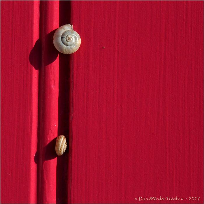 blog-p6249876-escargots-porte-rouge.jpg
