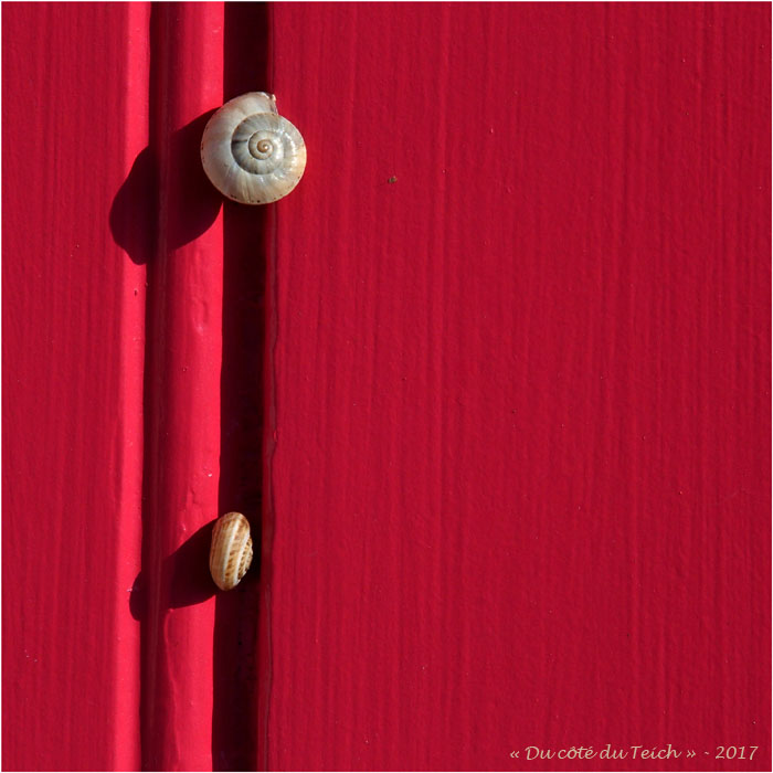 blog-p6249876-escargots-porte-rouge.jpg