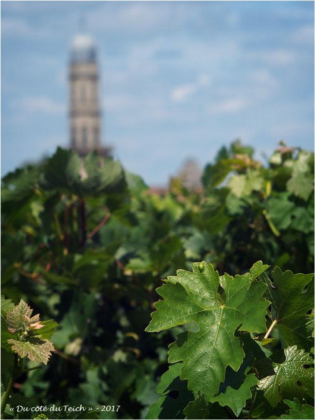 BLOG-P7110159-vigne et église St Seurin Lamarque