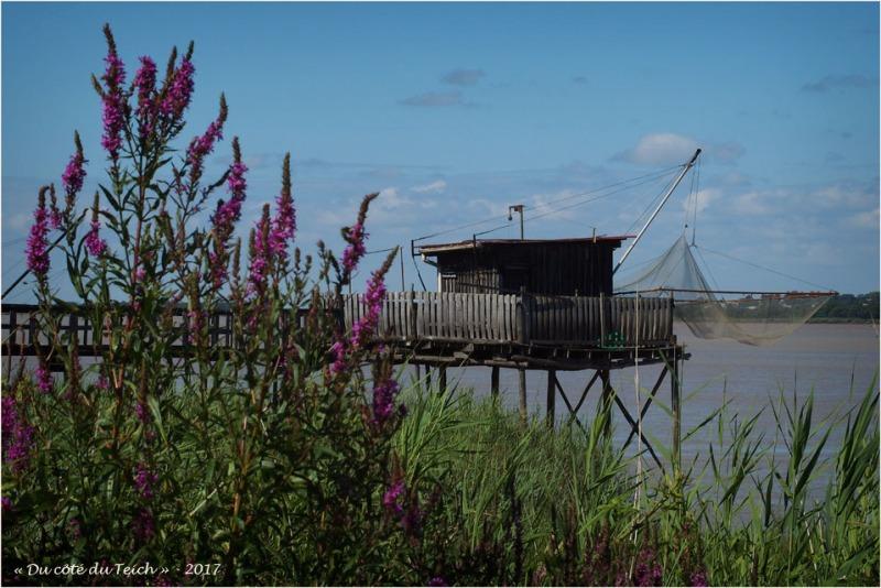 blog-p7110220-carrelet-estuaire-gironde.jpg