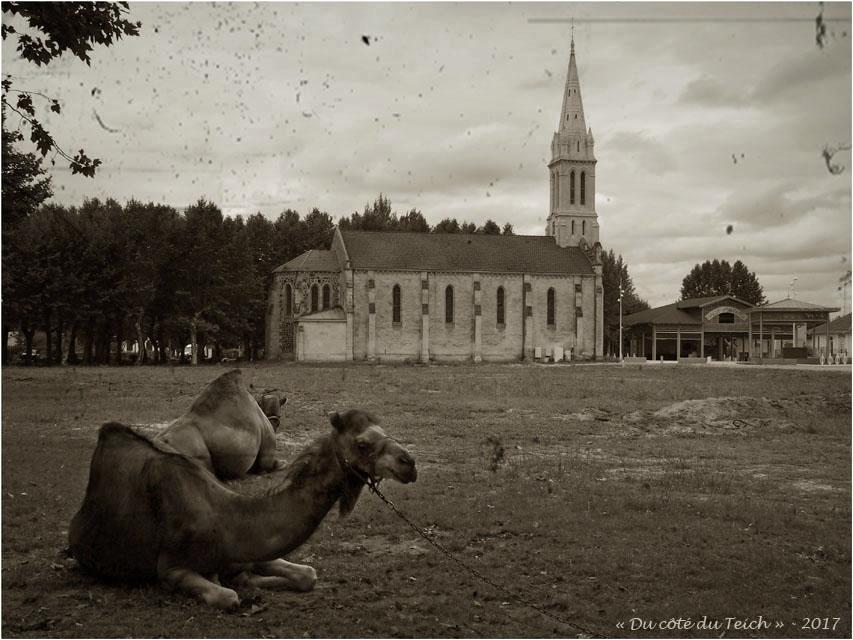 BLOG-P7200349-dromadaires église Audenge PA03BS
