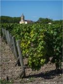 BLOG-P8010717-vignoble et église Margaux