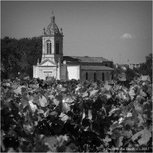 vigne et église Saint-Michel de Margaux