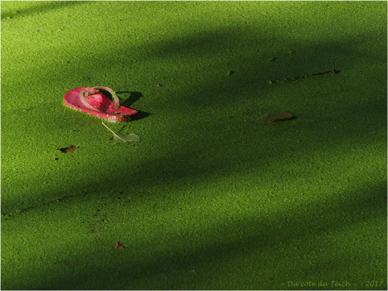 BLOG-P8171128-tong rose et mare verte