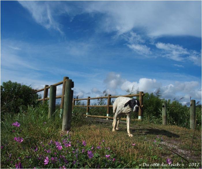 blog-p8181135-chien-passerelle-port-des-tuiles.jpg