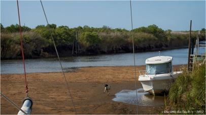 BLOG-P8291416-1-chien et Leyre marée basse