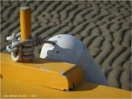 BLOG-P9141828-Margot marée basse