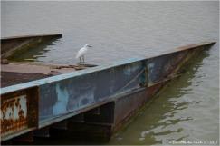 BLOG-DSC_41408-aigrette bassin à flot