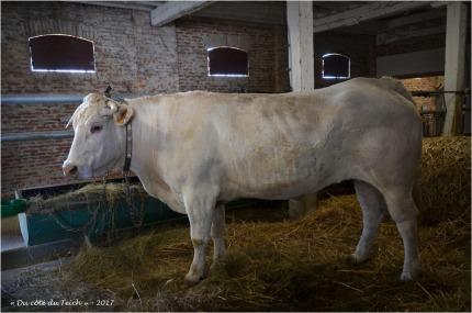 BLOG-DSC_41554-2-étable ferme Graveyron
