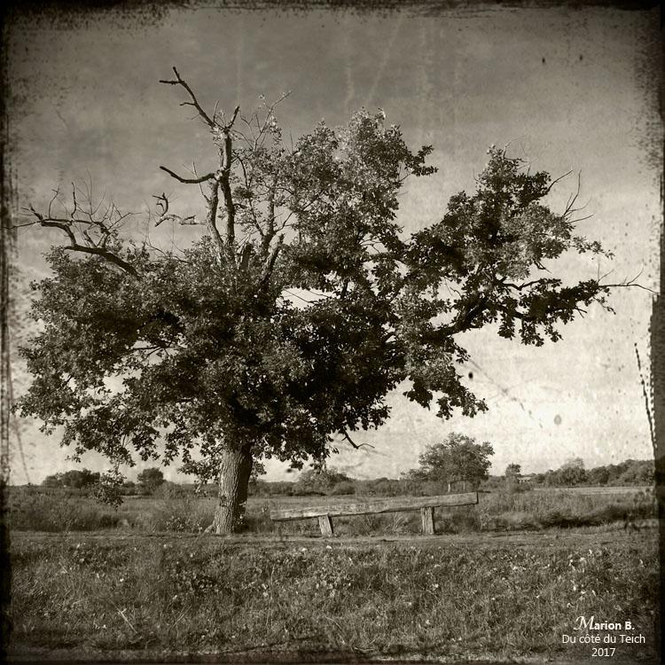 blog-pb180113-arbre-et-banc-pa2.jpg