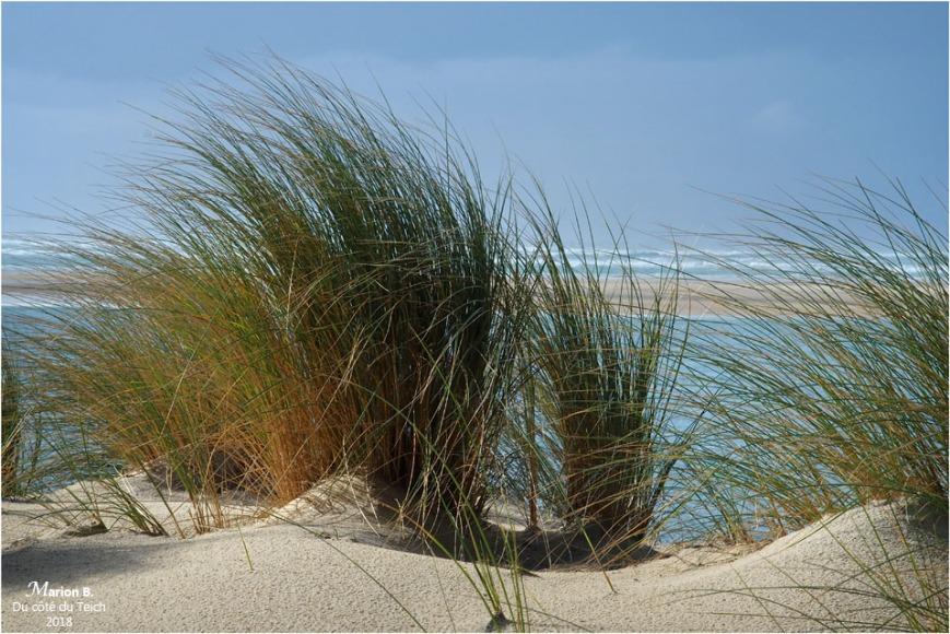 BLOG-P1260925-oyats plage petit Nice