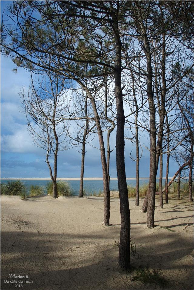 BLOG-P1260926-pins plage petit Nice