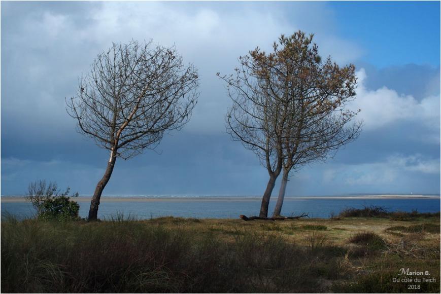 BLOG-P1260929-arbres plage petit Nice