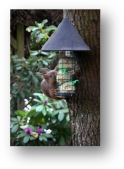 image005-écureuil boules à oiseaux