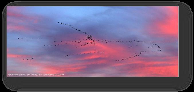 image009-vol grues cendrées le Teich
