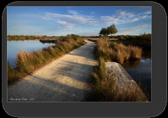 image010-réserve ornithologique le Teich