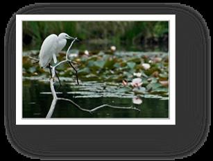 image021-aigrette réserve ornithologique le Teich