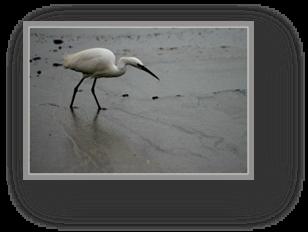 image023-aigrette réserve ornithologique le Teich