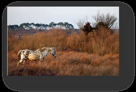 image034-cheval plaines du Teich