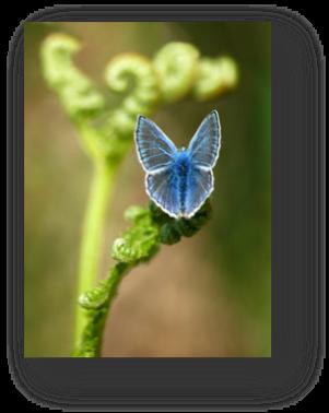 image038-papillon et fougère forêt le Teich