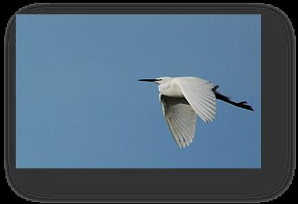 image042-aigrette réserve ornithologique le Teich