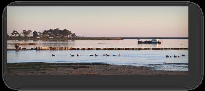 image050-oies bernache rivages Cassy