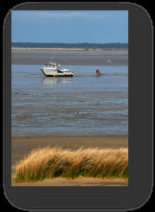 image058-pêche à pied le Teich