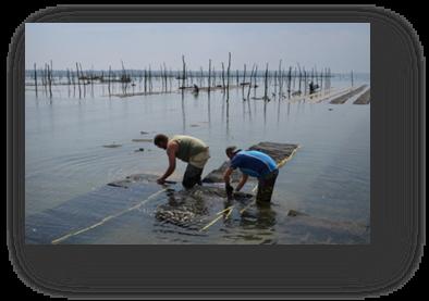 image060-travail parcs à huîtres Bassin d'Arcachon