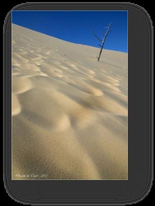 image075-érosion et recul dune du Pilat côté forêt