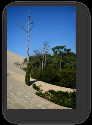 image076-érosion et recul dune du Pilat côté forêt