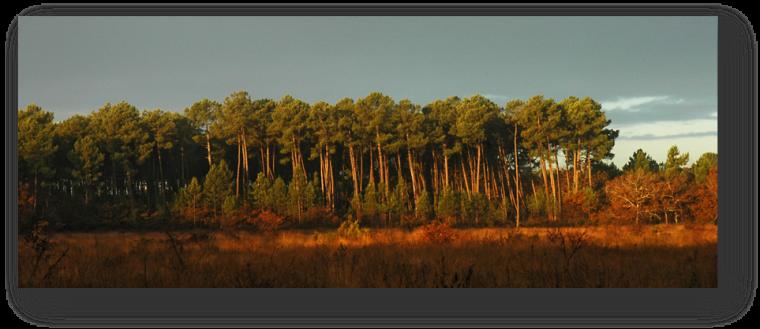 image080-forêt le Teich