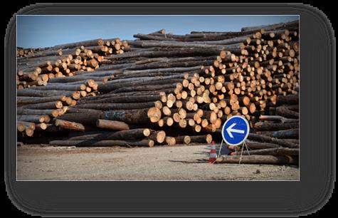 image082-aire stockage bois après tempête Klaus le Teich 2009