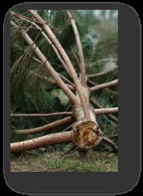 image084-dégats tempête Klaus forêt le Teich 2009